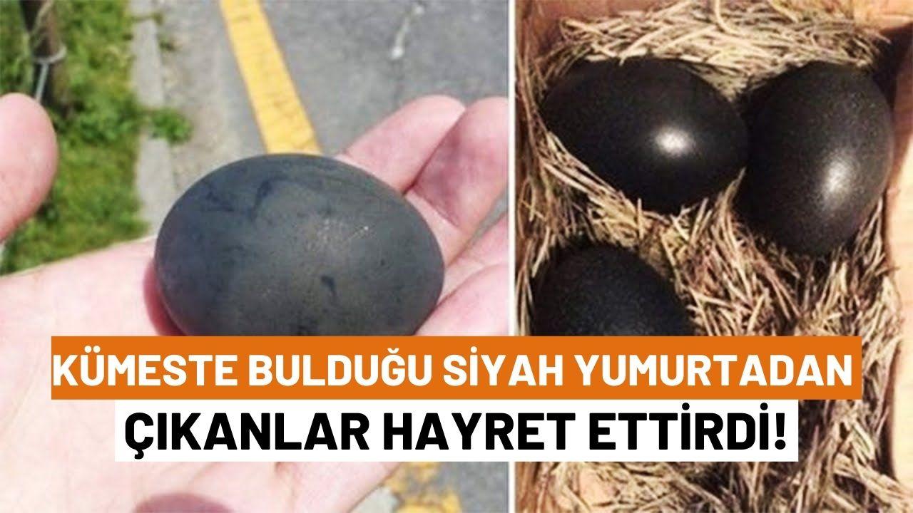 HDP için çözüm süreci...